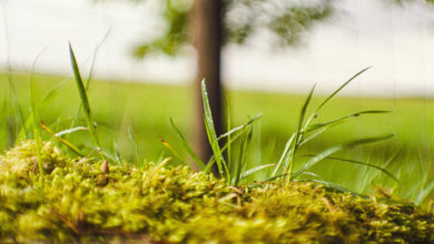 Green infrastructure to mitigate global warming?